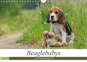 Beaglebabys