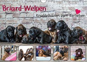 Briard-Welpen