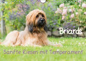 Briards-sanfte Riesen mit Temperament