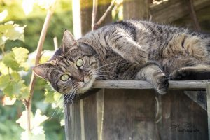 Emma, chillende Katze