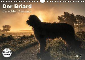 Der Briard-ein echter Charmeur-Planer