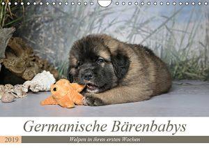 Germanische Bärenhundbabys