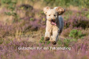 Gutschein-Titelbild