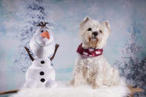 Hund beim Weihnachtsshooting