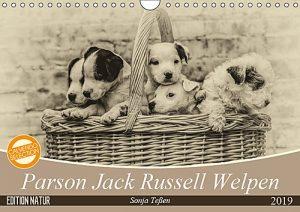 Parson Jack Russell Welpen