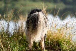 Hund von Hinten