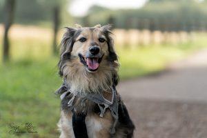 lächelnder Hund