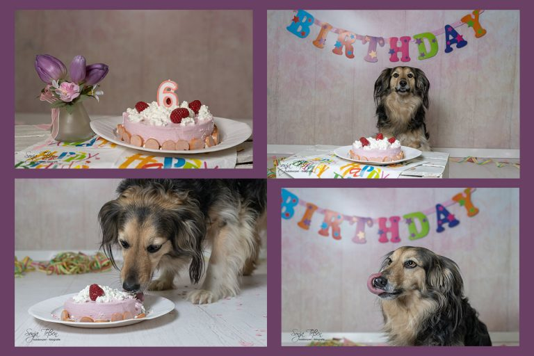 Read more about the article Dog-Cake-Smash-Shooting