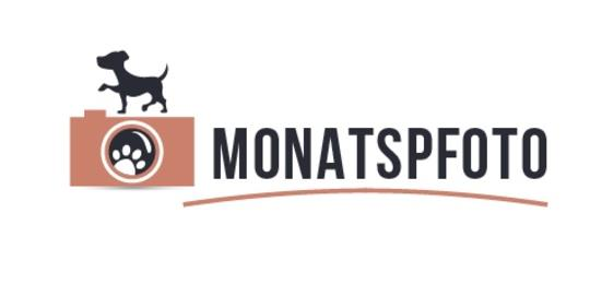 Monatspfoto-Logo-miDoggy