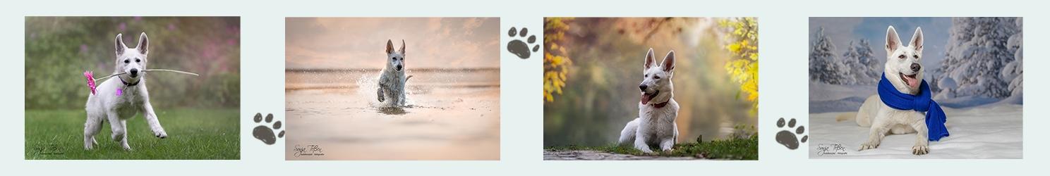 Seitenteiler Schäferhund